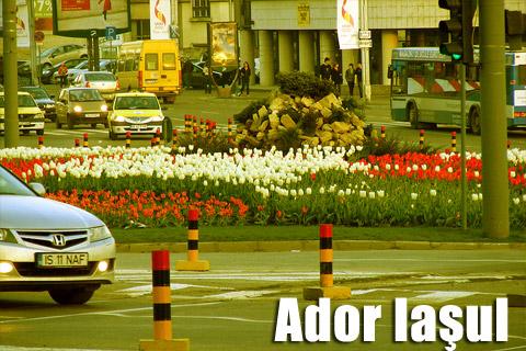 ador_iasul04.jpg
